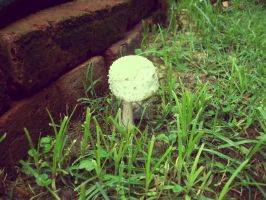 Mushroom in the garden by vdk84