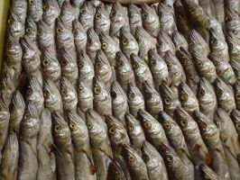 Plentiful Fish 14696743 by StockProject1