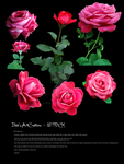 Rose stock red pink PNG by babsartcreations