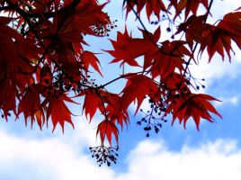 red leaves by lailichka