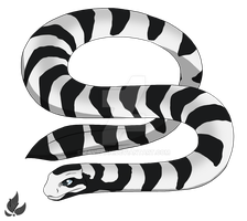 Banded sea snake by zavraan