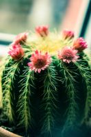 cactus by formapl