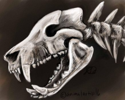 Species Skull Fossil by animalartist16