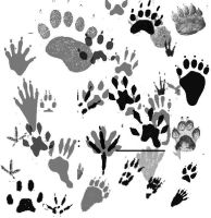 Animal Tracks Brushes by memories-stock