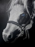 Horse Scratchboard by Child-of-God