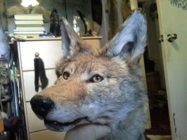 Huge Coyote Soft Mount by NightsGem
