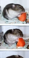 How Tamtam eats carrot by emmil