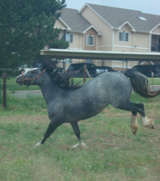 Blue Roan Stock 6 by tragedyseen