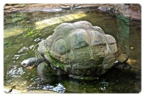 Giant tortoise. by jennystokes
