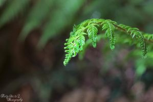 Fern by FortySixand2Photos