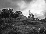 My forest! Black and White by dnomyar27poke