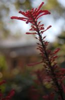 Red Flowers at Alamo by WidoPhoto