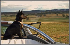 Dog In The Ute II by ENiGMA926