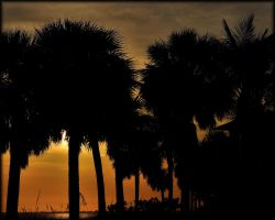 Sunset Through The Palms by TThealer56