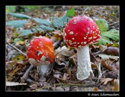 Fly agaric - II by SmoothEyes