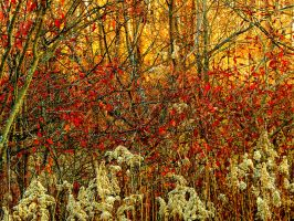 Shades of Autumn 2016, 14 by MadGardens