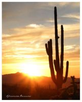 Awesome Arizona by LadyMorella