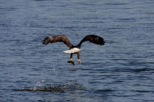 Eagles 009 by olearysfunphotos