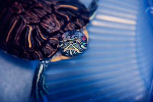Turtle 2 by tianafeng