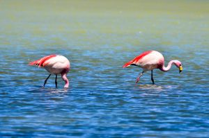 Sur Lipez - Flamingos 1 by LLukeBE