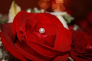 Red Rose by Tegaria