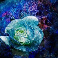 Ice-cold rose by Leina1