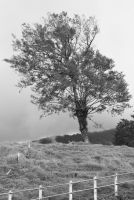 Tree on coudy hill by gregbohn