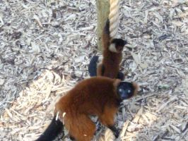 Colchester Zoo photos 30 by pan77155