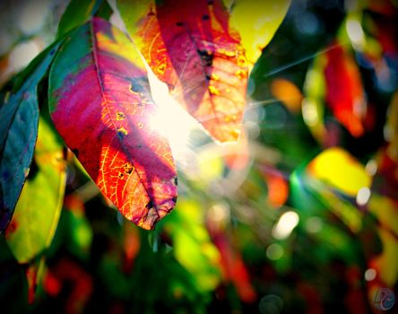Fall is Here by Beauty-in-a-Picture
