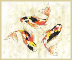 Koi by ToxicAffection