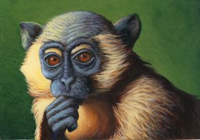 Mangabey by fig13