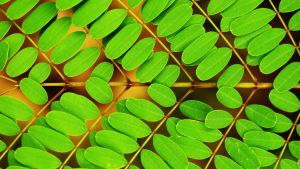 Red Bird Of Paradise Leaf Wall - High-Res by nonweasel