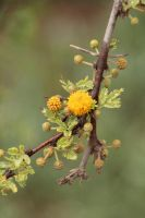 Little Bursts of Yellow by amm081