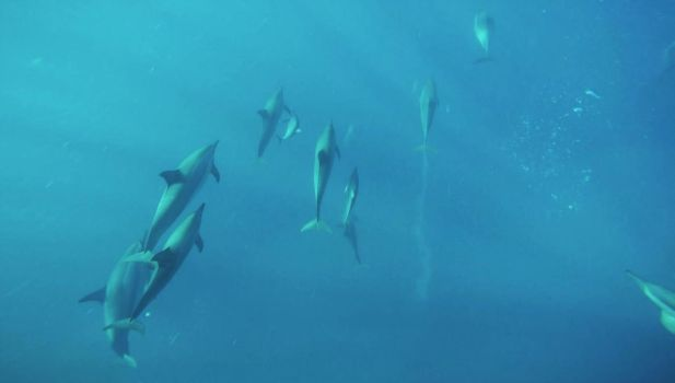 Dolphins of Mauritius by Quit007