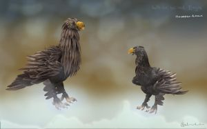 Juvenile and Adult Haliaeetus albicilla by Salooverall