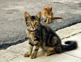 Kittens Everywhere.. by Catist
