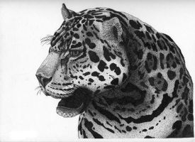 Jaguar Pen and Ink by LeoEyes