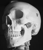 Skull Photo Stock 4 by CcTheMonkey