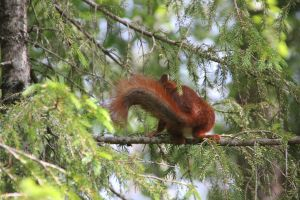 Squirrel 2 by Chance-STOCK