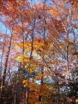 Colors of fall by AnaturalBeauty