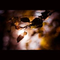 Yellowing Leaves by drkshp