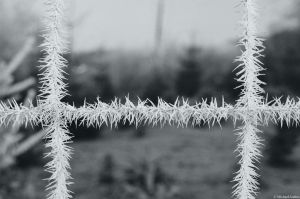 Film - LXXIV - ice barbed fence by Picture-Bandit