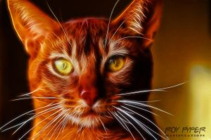 Theo the Abyssinian Cat: Fractalius Re-Edit by nerdboy69