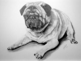 PUG Commission by Dhekalia