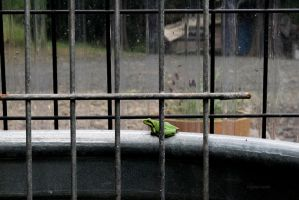 Frog Jail by Evanescent-Chaos