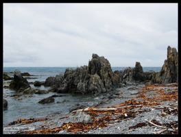 New Zealand Shore by Mogrianne