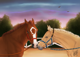 Evening Training - Groundwork by KittycatNita