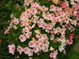 Pink blossems by gothic-faerie6