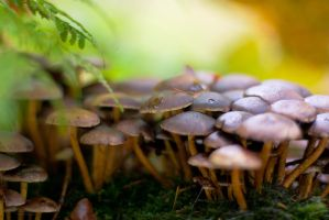 Group of mushrooms by Pamba