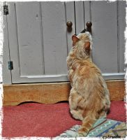 The Cat At The Cupboard by Estruda